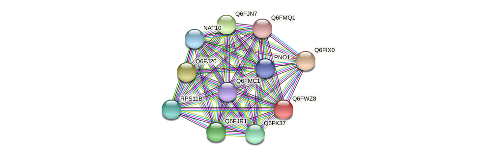 XP_445246.1 protein (Candida glabrata) - STRING interaction network