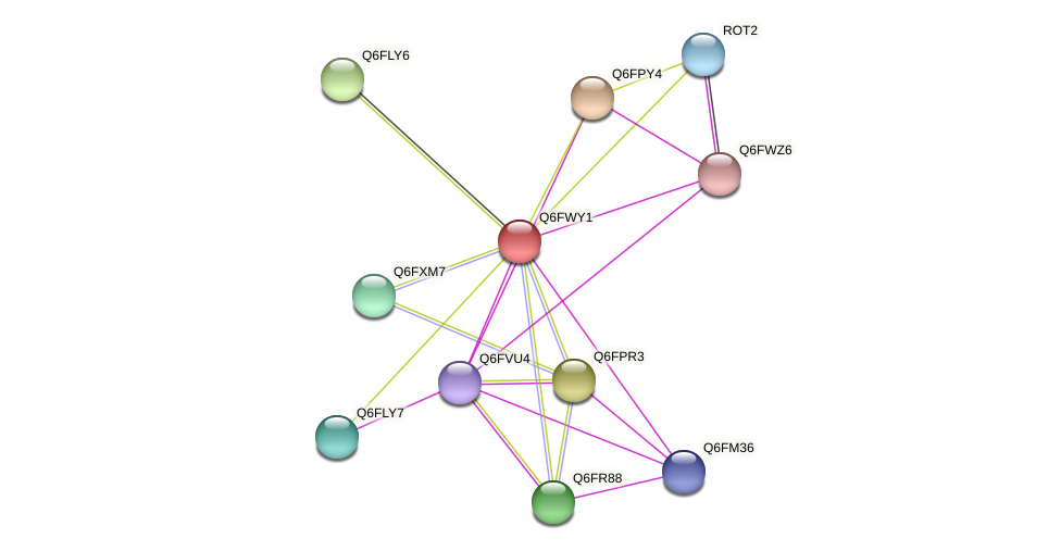 XP_445263.1 protein (Candida glabrata) - STRING interaction network