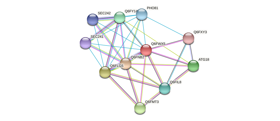 XP_445269.1 protein (Candida glabrata) - STRING interaction network