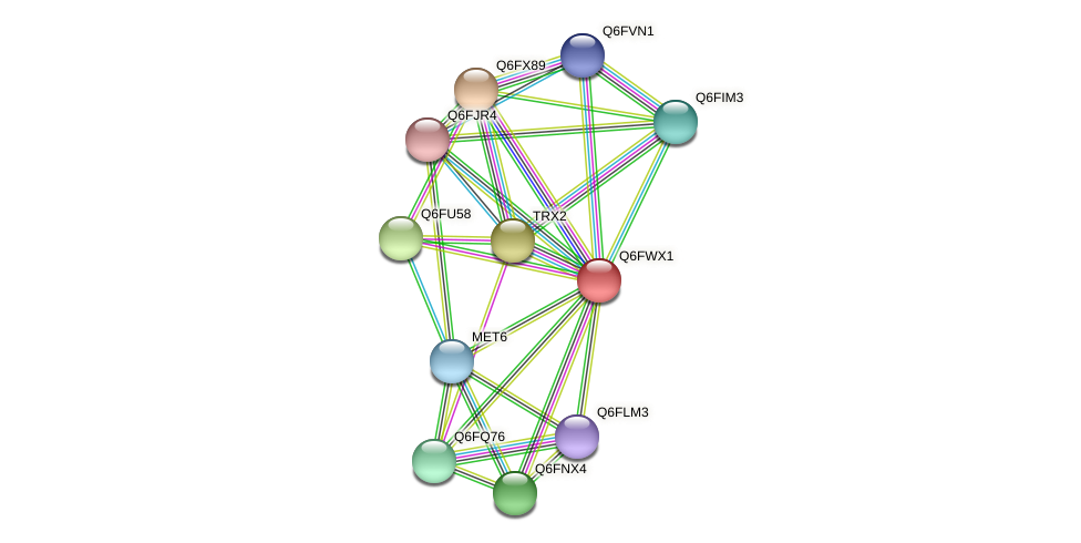 XP_445273.1 protein (Candida glabrata) - STRING interaction network
