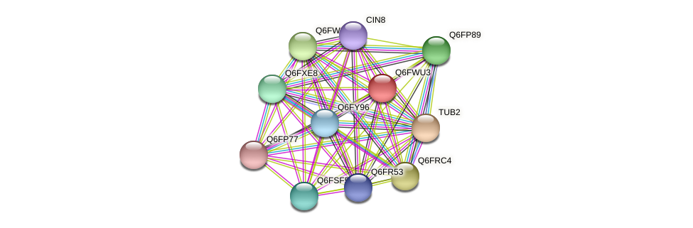 XP_445301.1 protein (Candida glabrata) - STRING interaction network