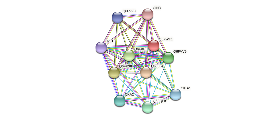 XP_445313.1 protein (Candida glabrata) - STRING interaction network