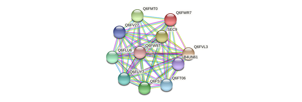XP_445327.1 protein (Candida glabrata) - STRING interaction network