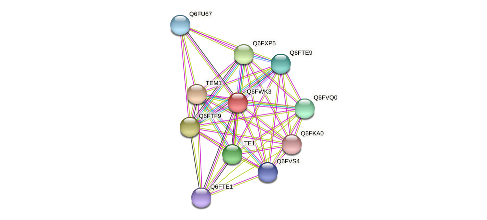 XP_445391.1 protein (Candida glabrata) - STRING interaction network