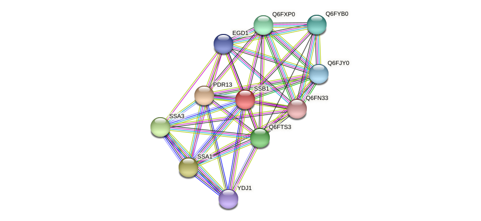 XP_445408.1 protein (Candida glabrata) - STRING interaction network
