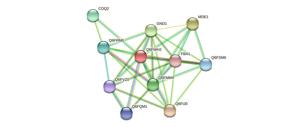 XP_445422.1 protein (Candida glabrata) - STRING interaction network
