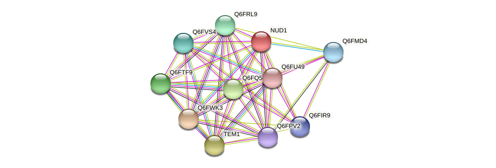 NUD1 protein (Candida glabrata) - STRING interaction network