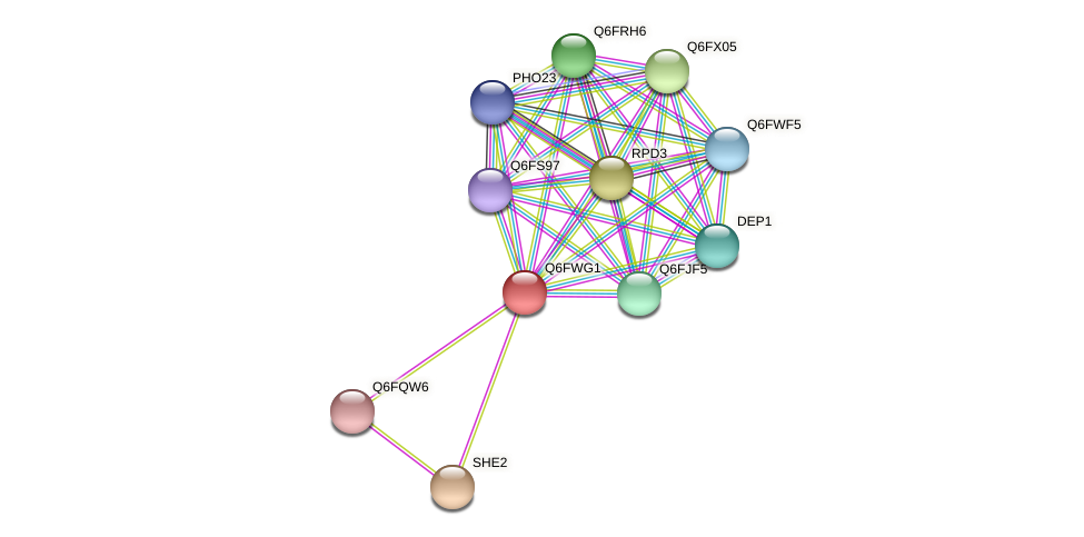 XP_445433.1 protein (Candida glabrata) - STRING interaction network