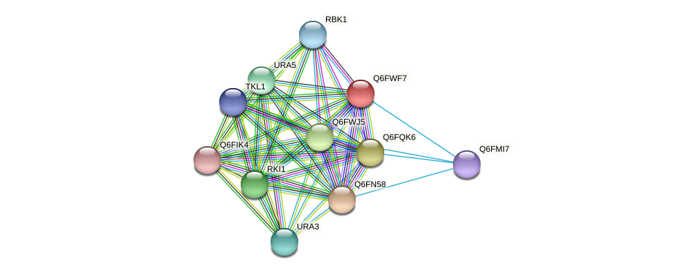 XP_445437.1 protein (Candida glabrata) - STRING interaction network