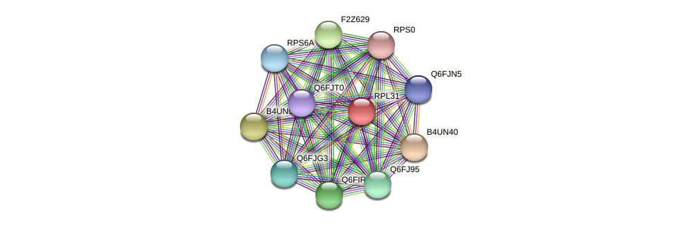RPL31 protein (Candida glabrata) - STRING interaction network