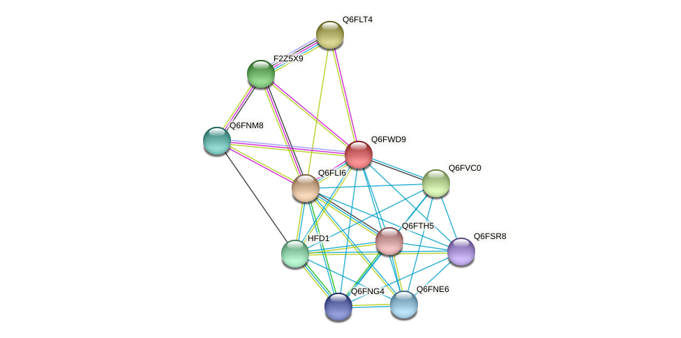 XP_445455.1 protein (Candida glabrata) - STRING interaction network