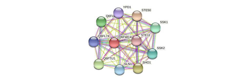 XP_445470.1 protein (Candida glabrata) - STRING interaction network