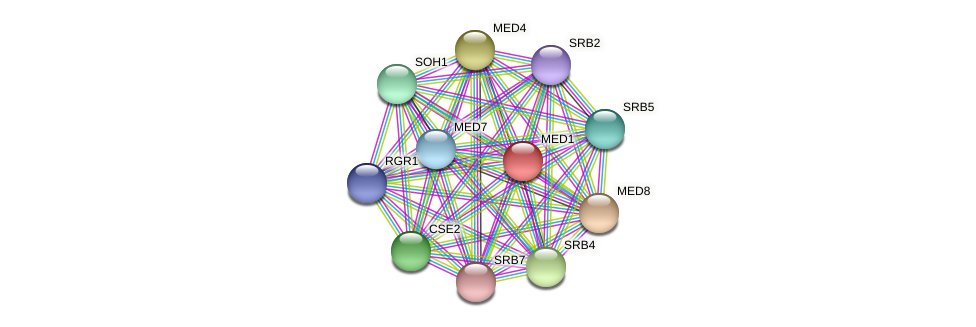 MED1 protein (Candida glabrata) - STRING interaction network