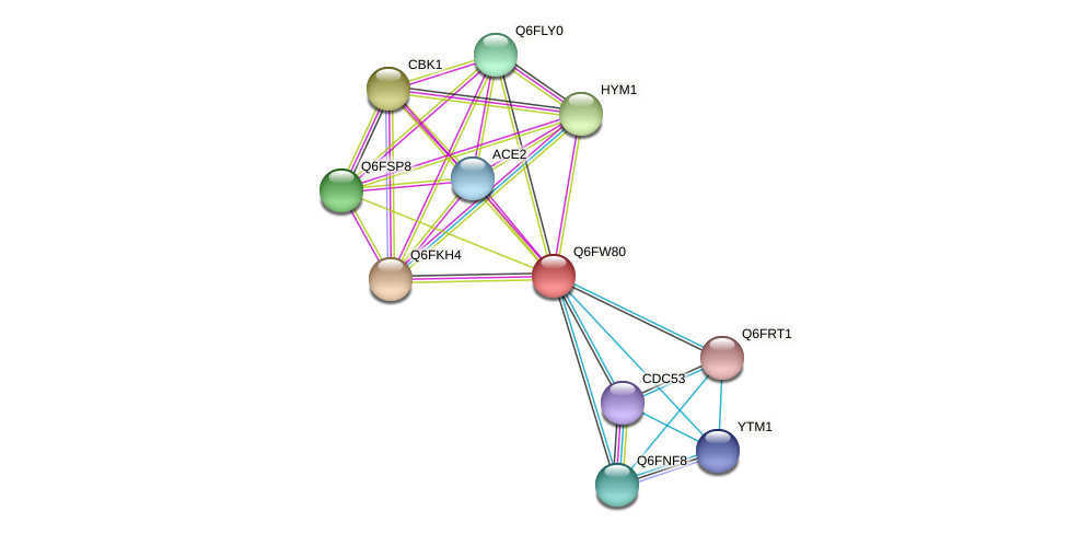 XP_445514.1 protein (Candida glabrata) - STRING interaction network