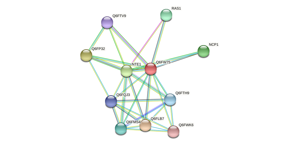 XP_445519.1 protein (Candida glabrata) - STRING interaction network
