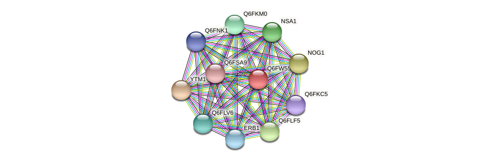 XP_445539.1 protein (Candida glabrata) - STRING interaction network