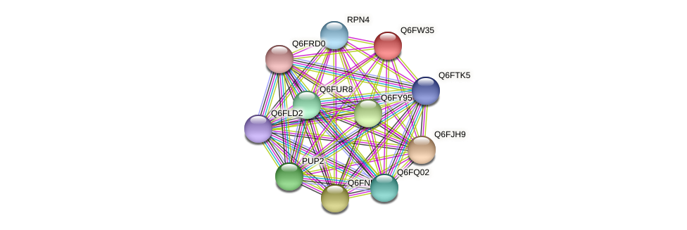 XP_445559.1 protein (Candida glabrata) - STRING interaction network