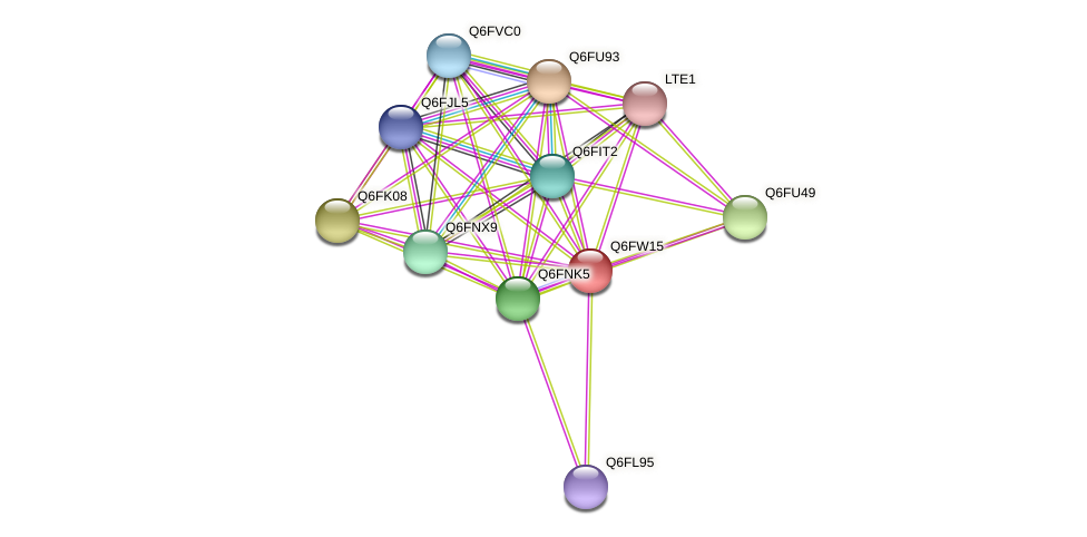 XP_445579.1 protein (Candida glabrata) - STRING interaction network