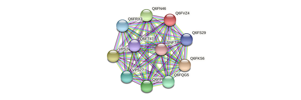 XP_445600.1 protein (Candida glabrata) - STRING interaction network
