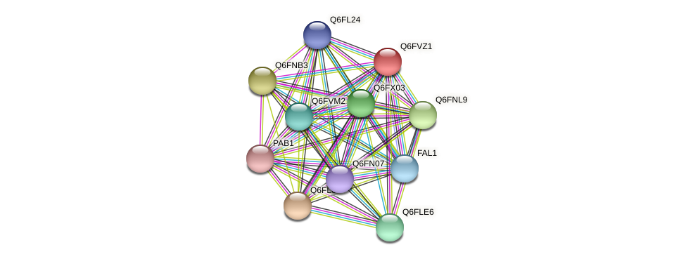 XP_445603.1 protein (Candida glabrata) - STRING interaction network