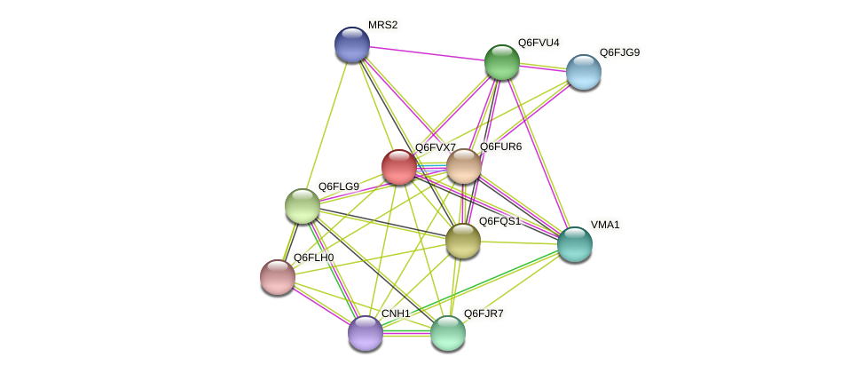 XP_445617.1 protein (Candida glabrata) - STRING interaction network