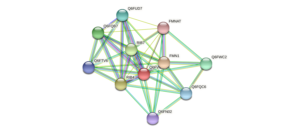 XP_445640.1 protein (Candida glabrata) - STRING interaction network