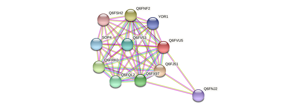 XP_445649.1 protein (Candida glabrata) - STRING interaction network