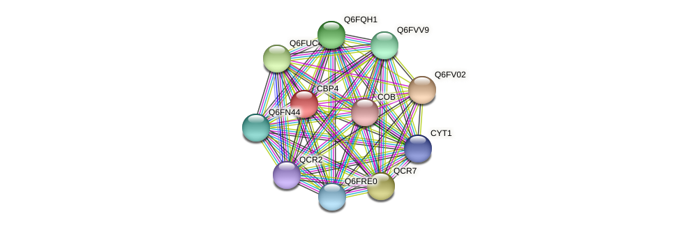 CBP4 protein (Candida glabrata) - STRING interaction network