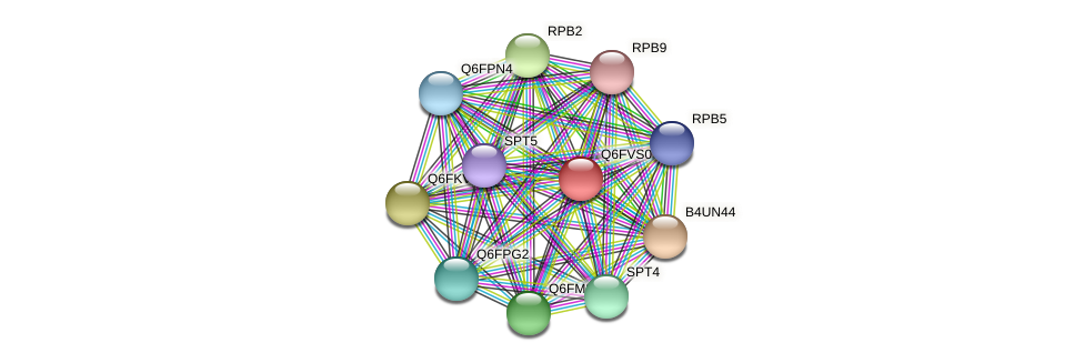 XP_445674.1 protein (Candida glabrata) - STRING interaction network