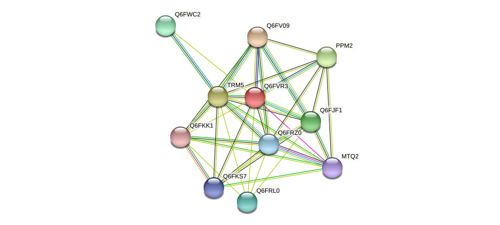 XP_445681.1 protein (Candida glabrata) - STRING interaction network