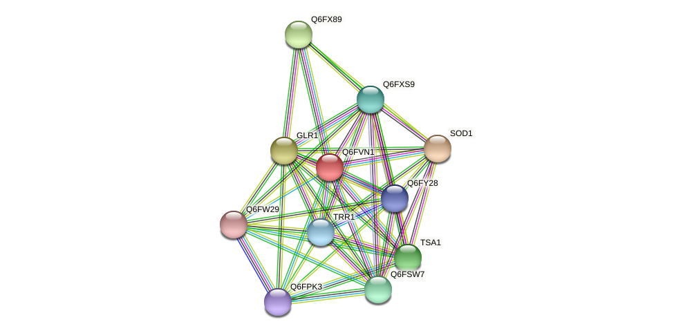 XP_445713.1 protein (Candida glabrata) - STRING interaction network