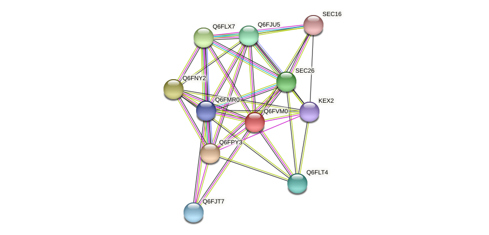 XP_445724.2 protein (Candida glabrata) - STRING interaction network