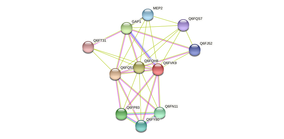 XP_445735.1 protein (Candida glabrata) - STRING interaction network