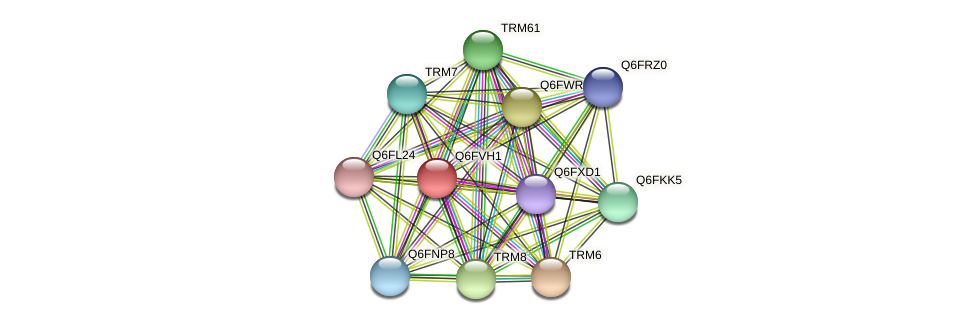 XP_445773.1 protein (Candida glabrata) - STRING interaction network