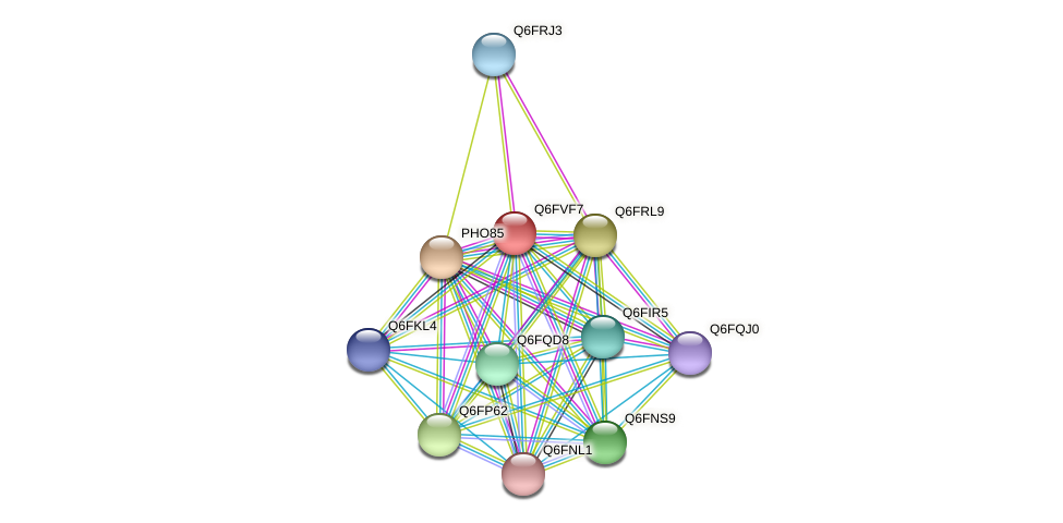 XP_445787.1 protein (Candida glabrata) - STRING interaction network