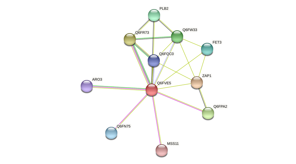 XP_445799.1 protein (Candida glabrata) - STRING interaction network