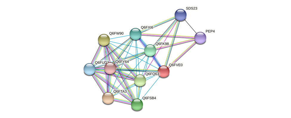 XP_445804.1 protein (Candida glabrata) - STRING interaction network