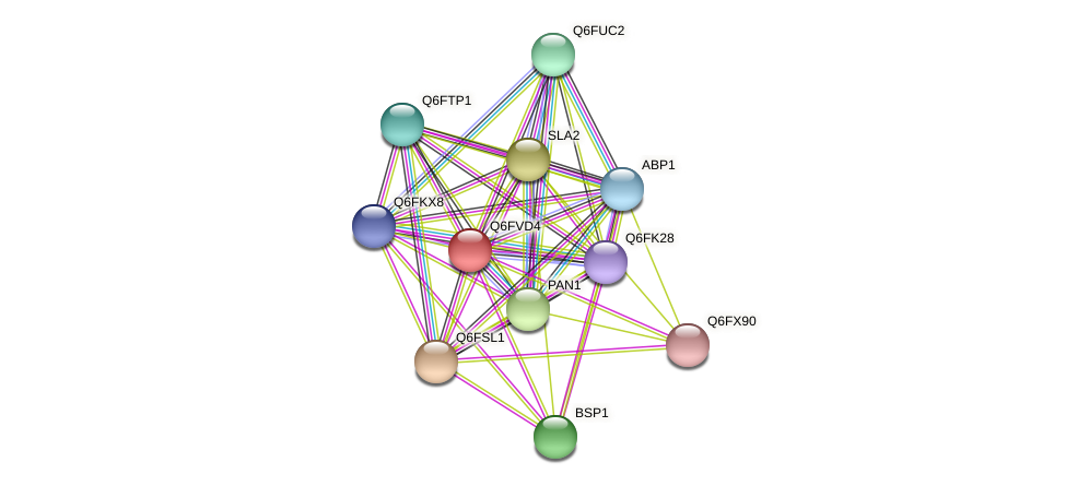 XP_445810.1 protein (Candida glabrata) - STRING interaction network