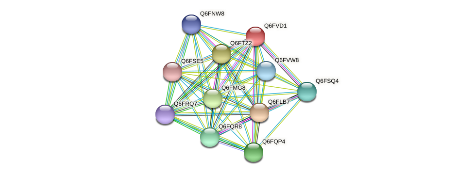 XP_445813.1 protein (Candida glabrata) - STRING interaction network