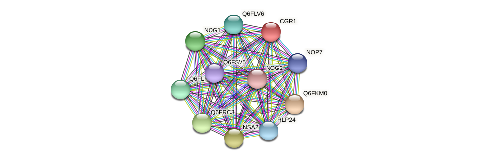 XP_445817.1 protein (Candida glabrata) - STRING interaction network