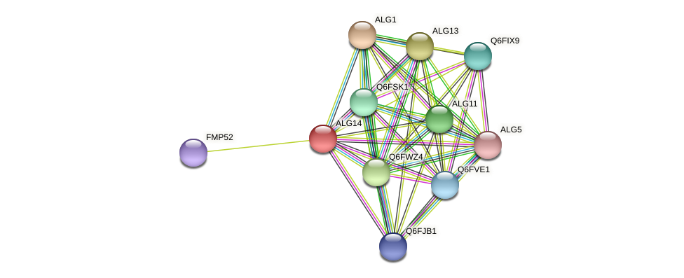 ALG14 protein (Candida glabrata) - STRING interaction network