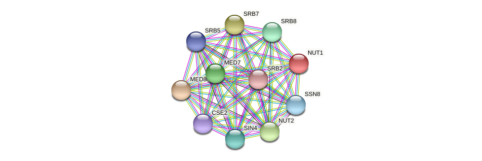 NUT1 protein (Candida glabrata) - STRING interaction network
