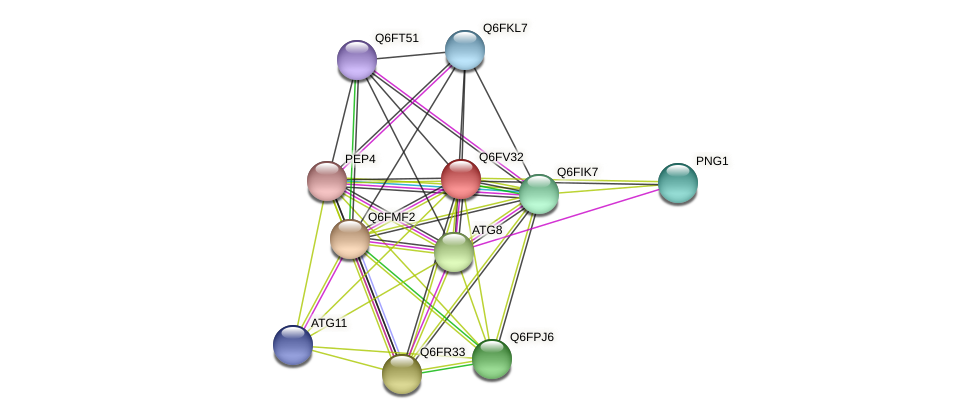 XP_445912.1 protein (Candida glabrata) - STRING interaction network