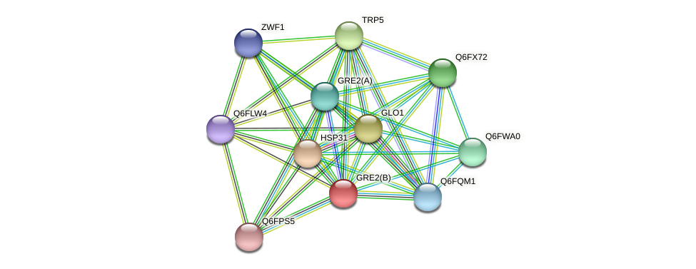 GRE2(B) protein (Candida glabrata) - STRING interaction network