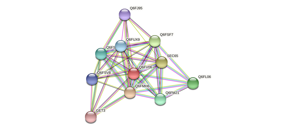 XP_445938.1 protein (Candida glabrata) - STRING interaction network