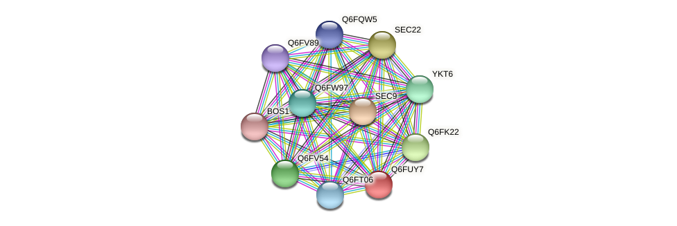 XP_445957.1 protein (Candida glabrata) - STRING interaction network