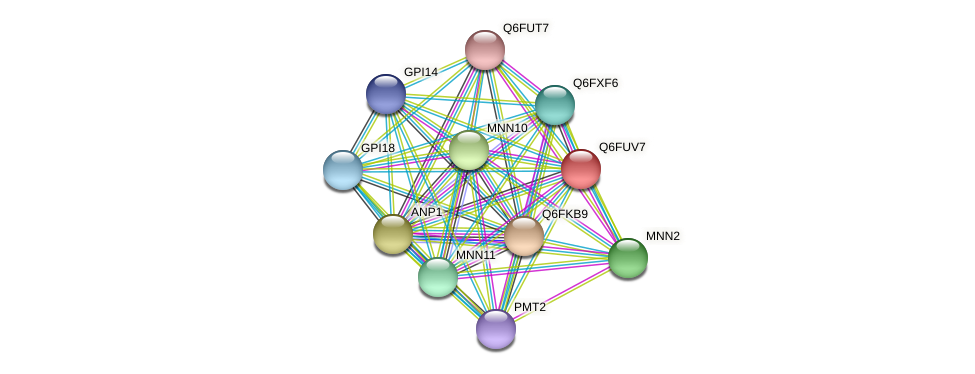 XP_445987.1 protein (Candida glabrata) - STRING interaction network