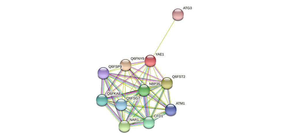YAE1 protein (Candida glabrata) - STRING interaction network