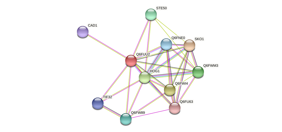 XP_446002.1 protein (Candida glabrata) - STRING interaction network