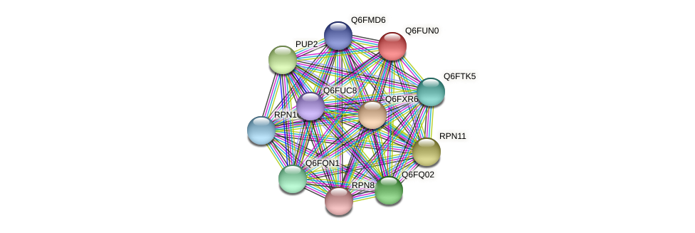XP_446064.1 protein (Candida glabrata) - STRING interaction network